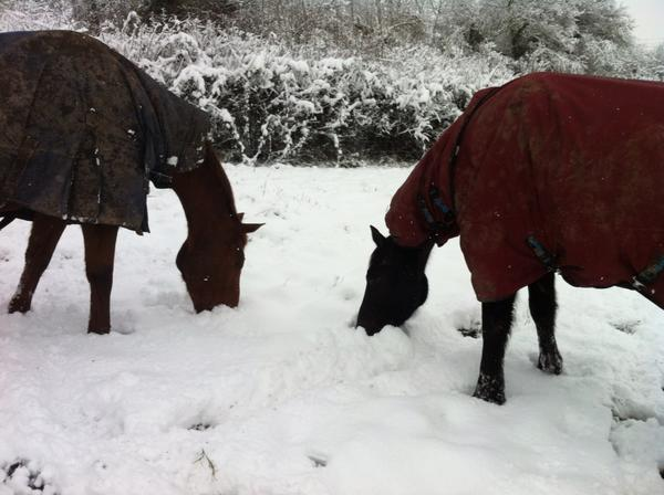 The horses didn't seem to mind it either!